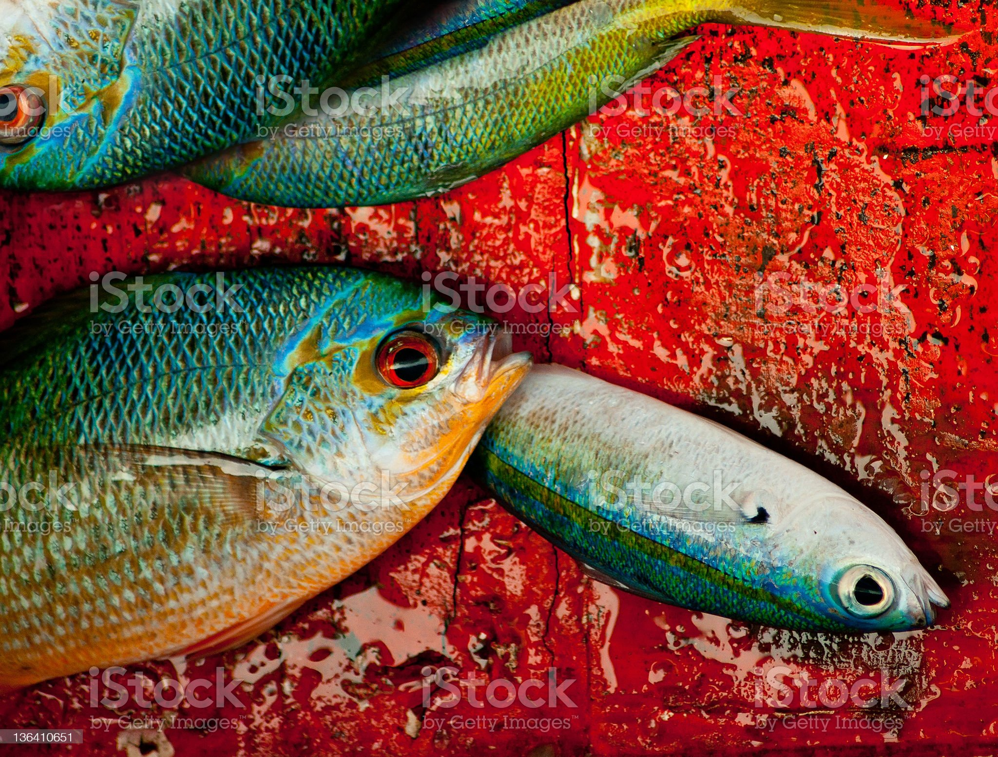 caught fish on deck royalty-free stock photo