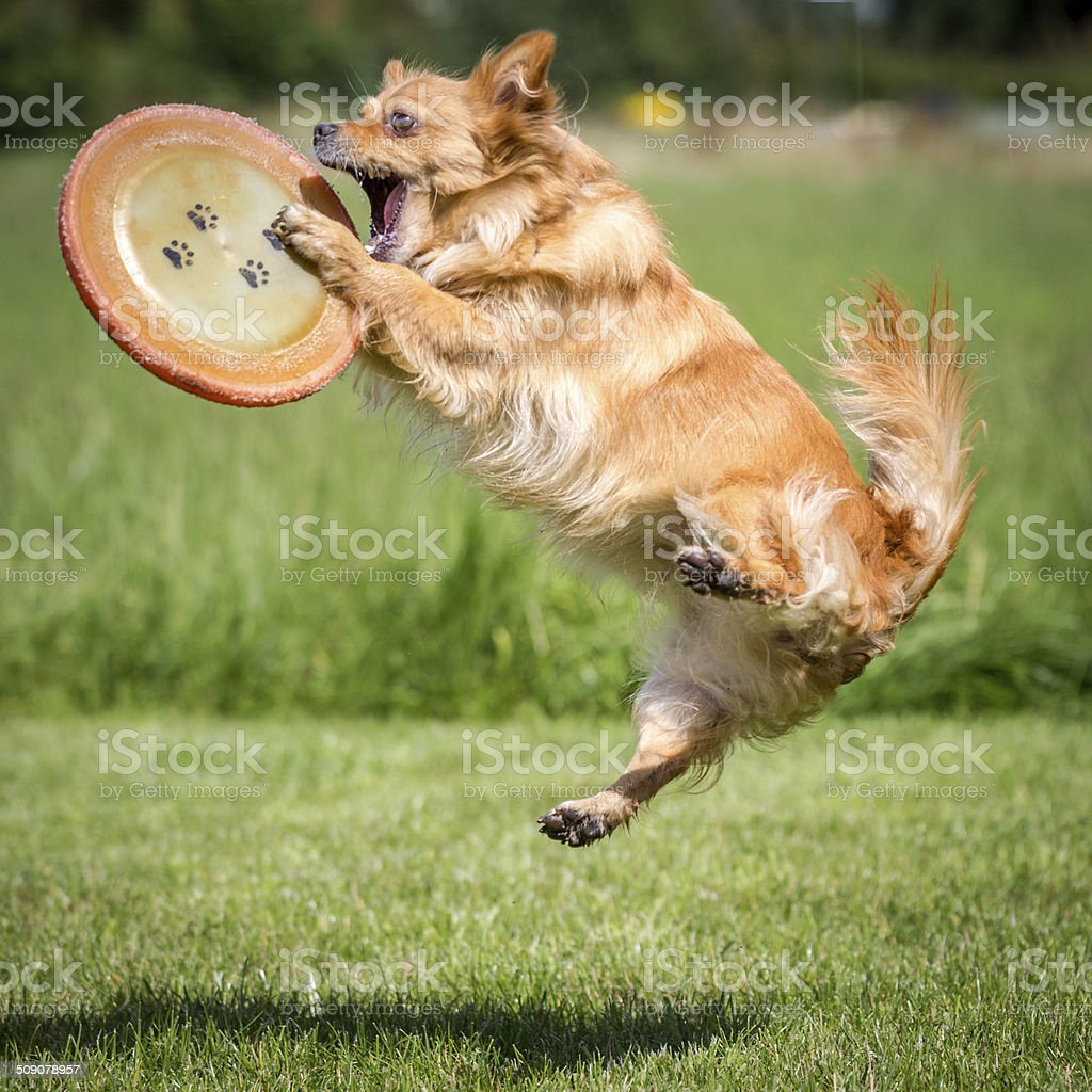 Caught Frisbee stock photo