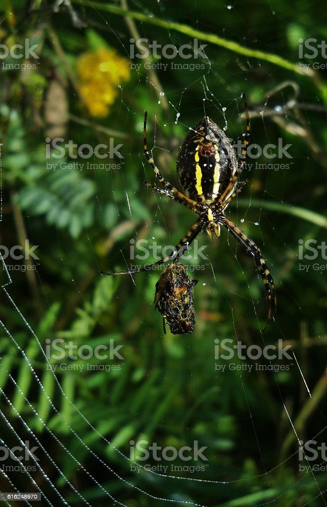 Caught In A Deadly Web stock photo