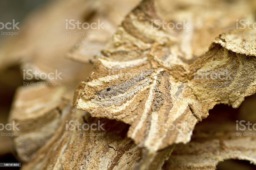 Caught in a hornet's nest? royalty-free stock photo
