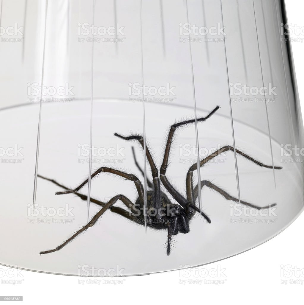 caught spider under a glass bowl stock photo