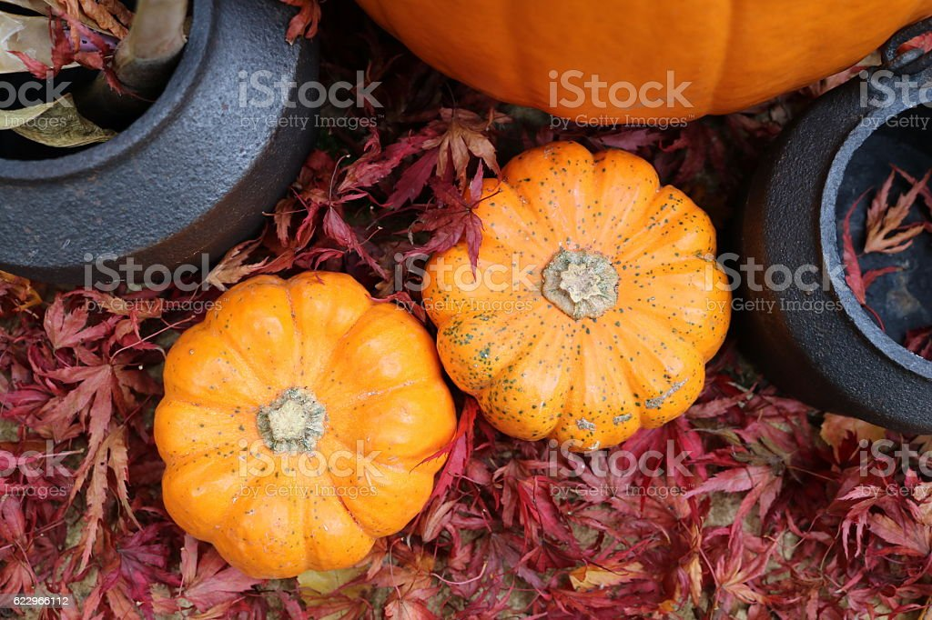 Cauldrons and small pumpkins in red leaves taken from above stock photo