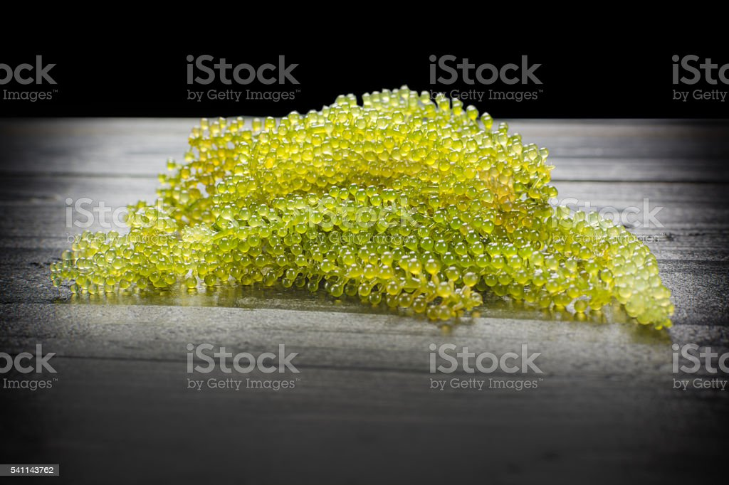 Caulerpa lentillifera - sea grapes or green caviar. royalty-free stock photo