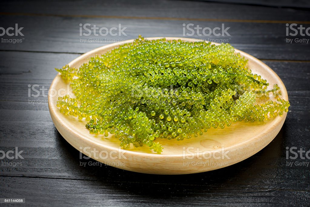Caulerpa lentillifera - sea grapes or green caviar. stock photo