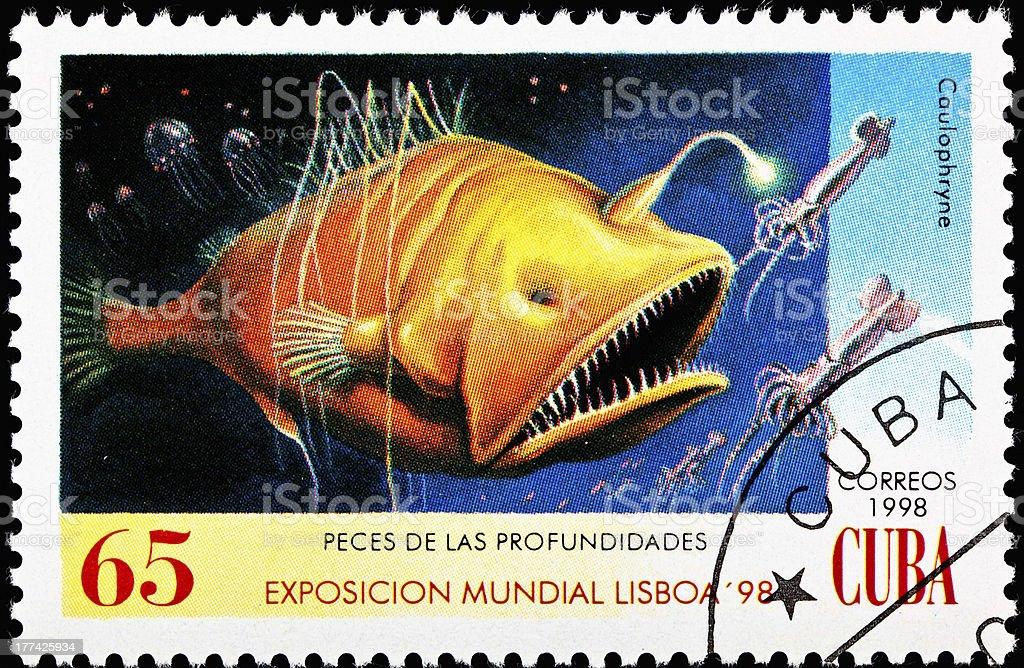 Caulophryne polynema Hairy Angler Fish Biolumiesent lure stock photo