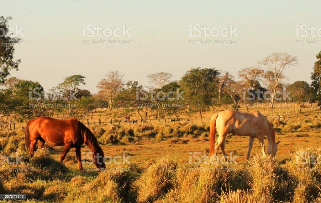 cavalos stock photo