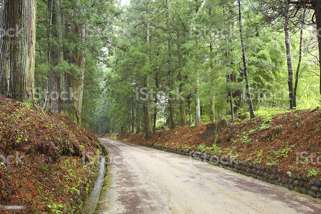 Cedar avenue of Nikko royalty-free stock photo