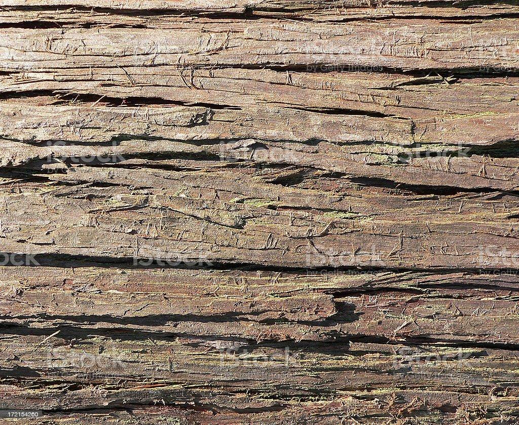 Cedar Bark royalty-free stock photo