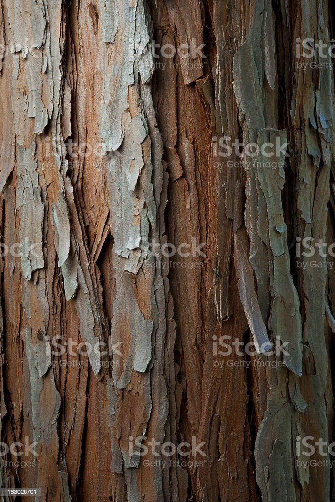 Cedar Bark royalty-free stock photo