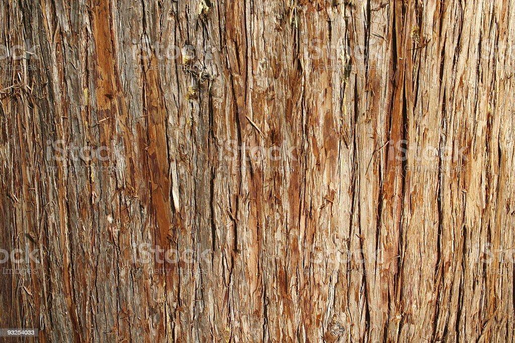 Cedar Bark stock photo
