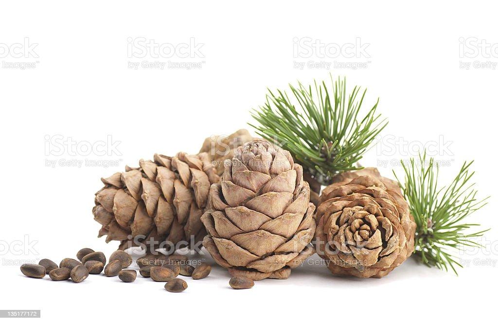 Cedar cones and nuts stock photo