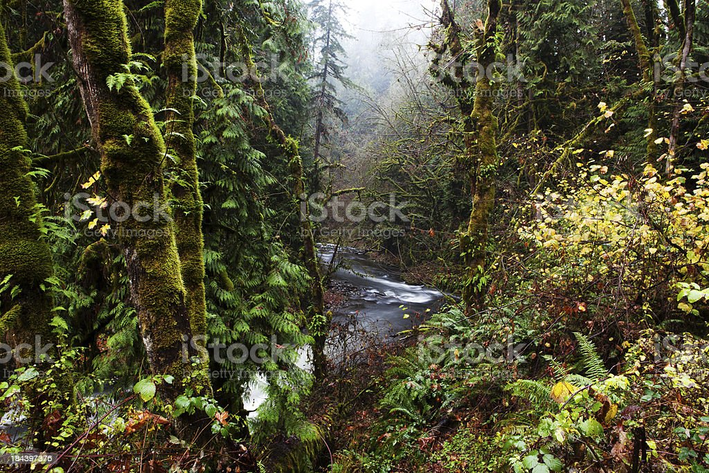 Cedar Creek in the forest stock photo