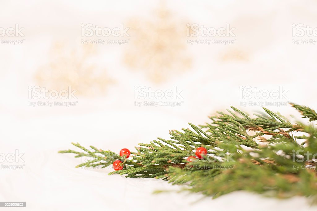 Cedar tree branch, red holly berries on white. stock photo