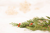 Cedar tree branch, red holly berries on white.