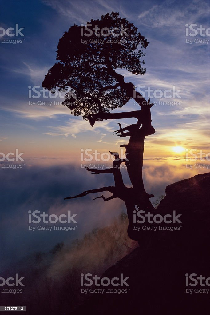 Cedar Tree Sunset, Mount Magazine, Arkansas stock photo
