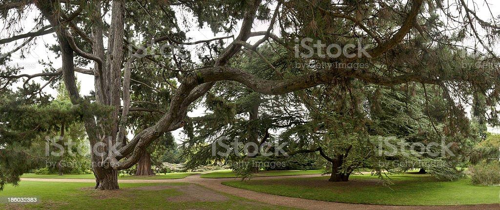 Cedar trees at a crossroad stock photo