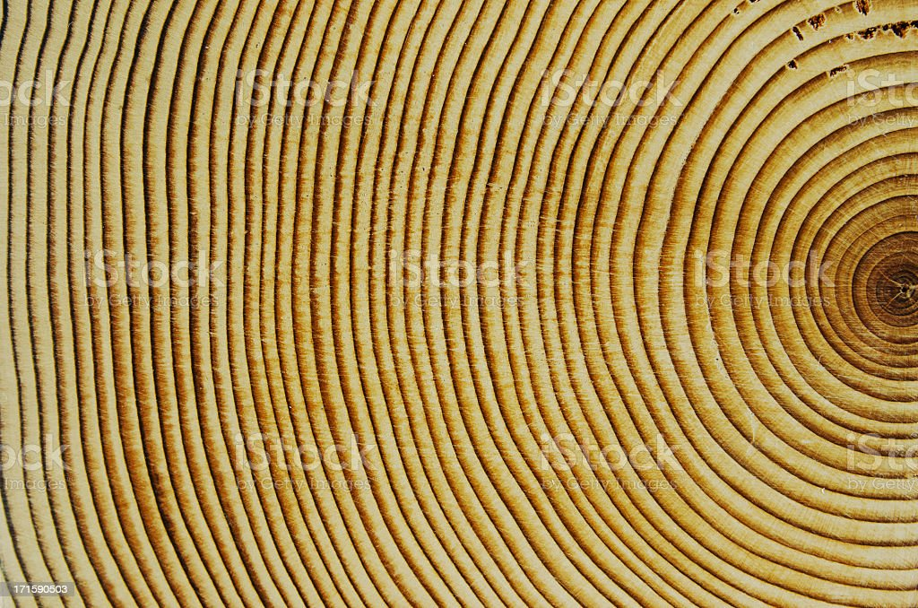 Cedar Wood Growth Rings stock photo