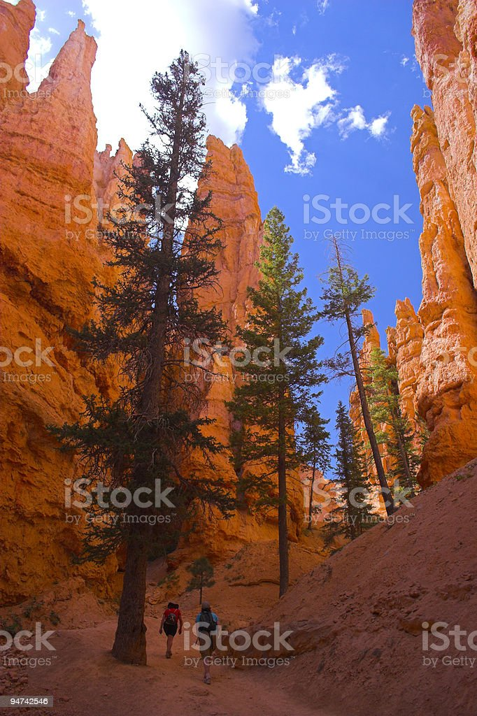 Cedars of red mountains royalty-free stock photo