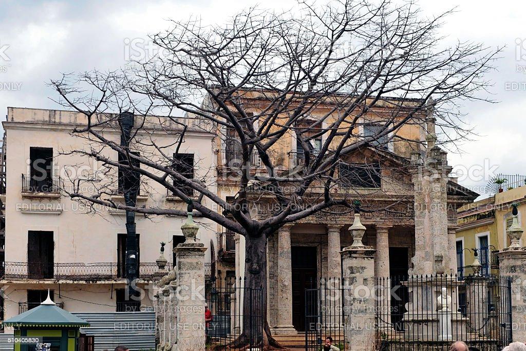 Ceiba Tree in old Havana stock photo