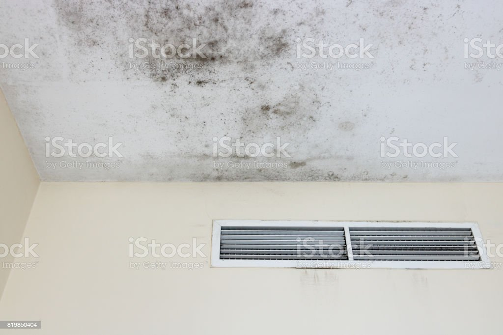 Ceiling mold stock photo