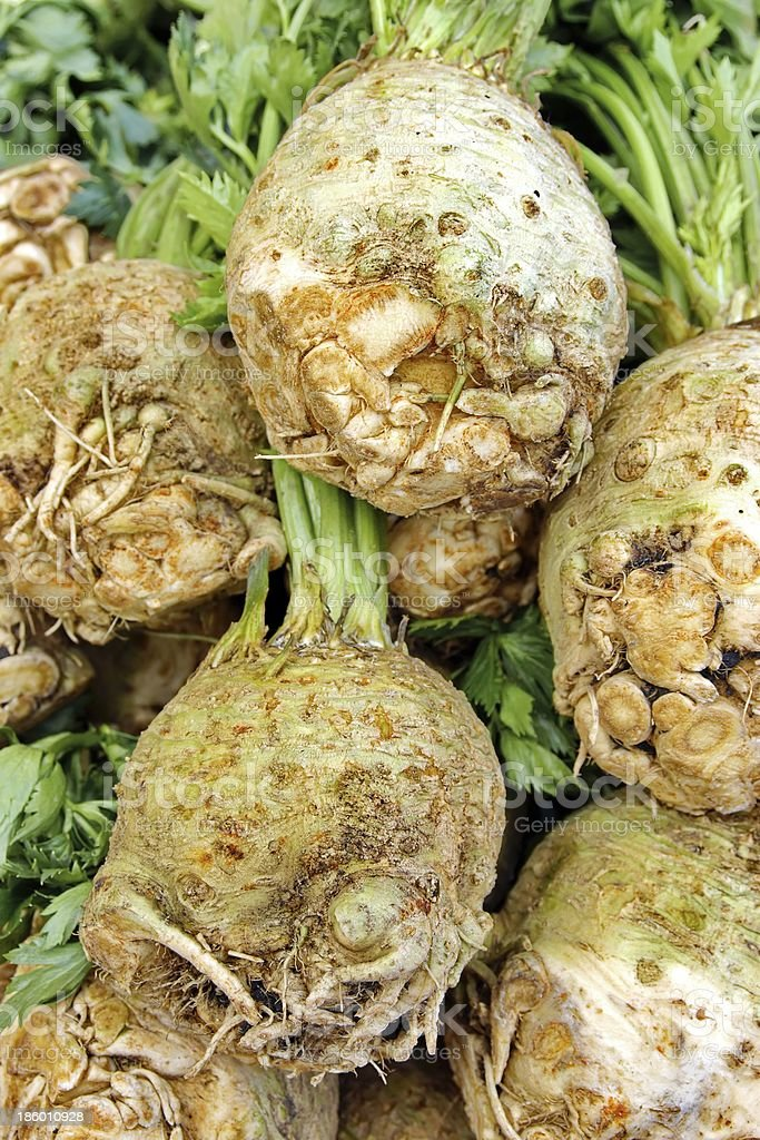 Celery Root and Leaves XXXL stock photo