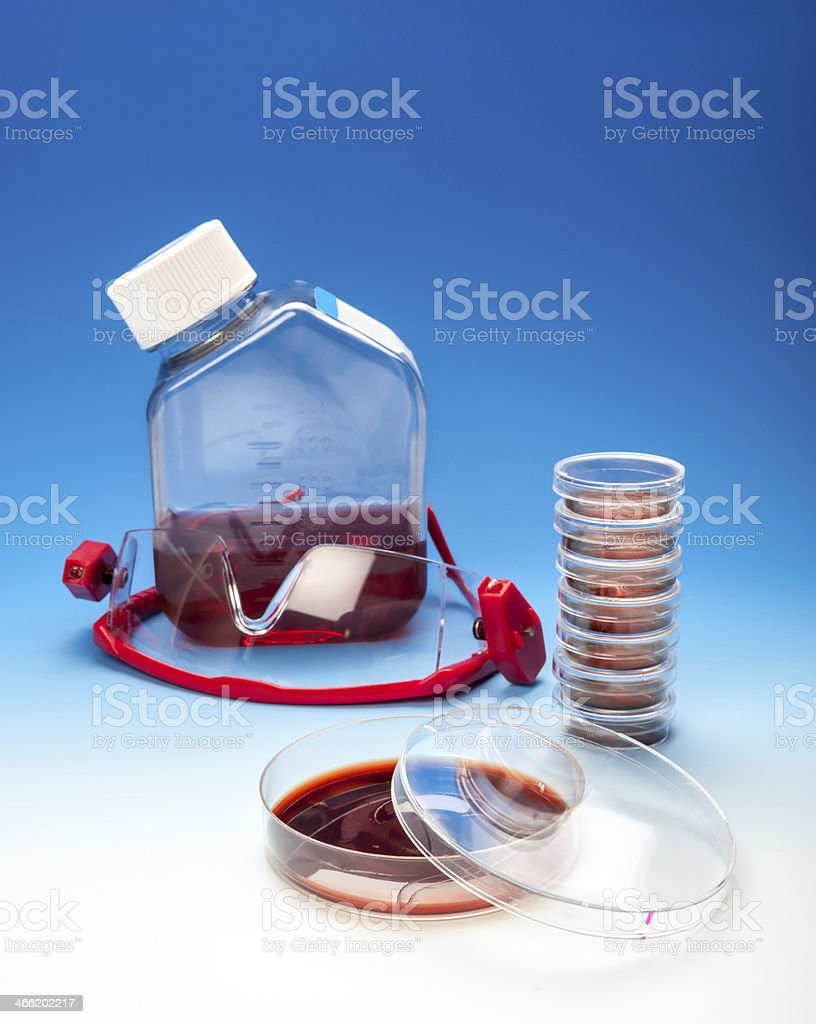 Cell culture or bacterial experiment stock photo