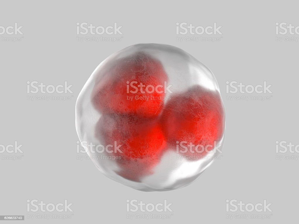 cell embryo stock photo