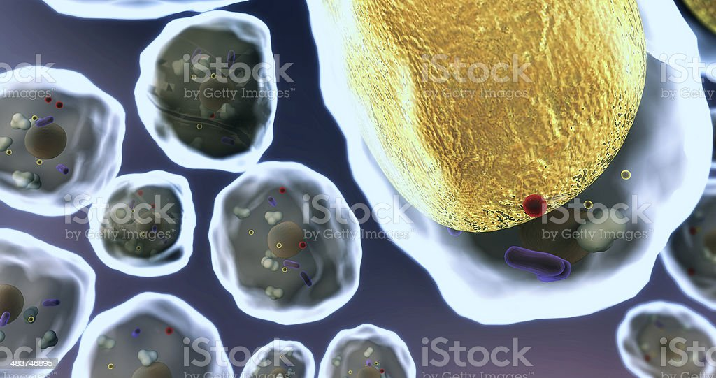 cell, fat cells stock photo