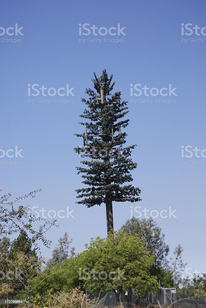 cell phone tower disguised as a tree stock photo