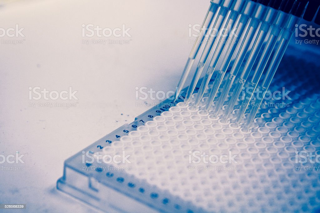 Cell Research with Multichannel Pipette stock photo