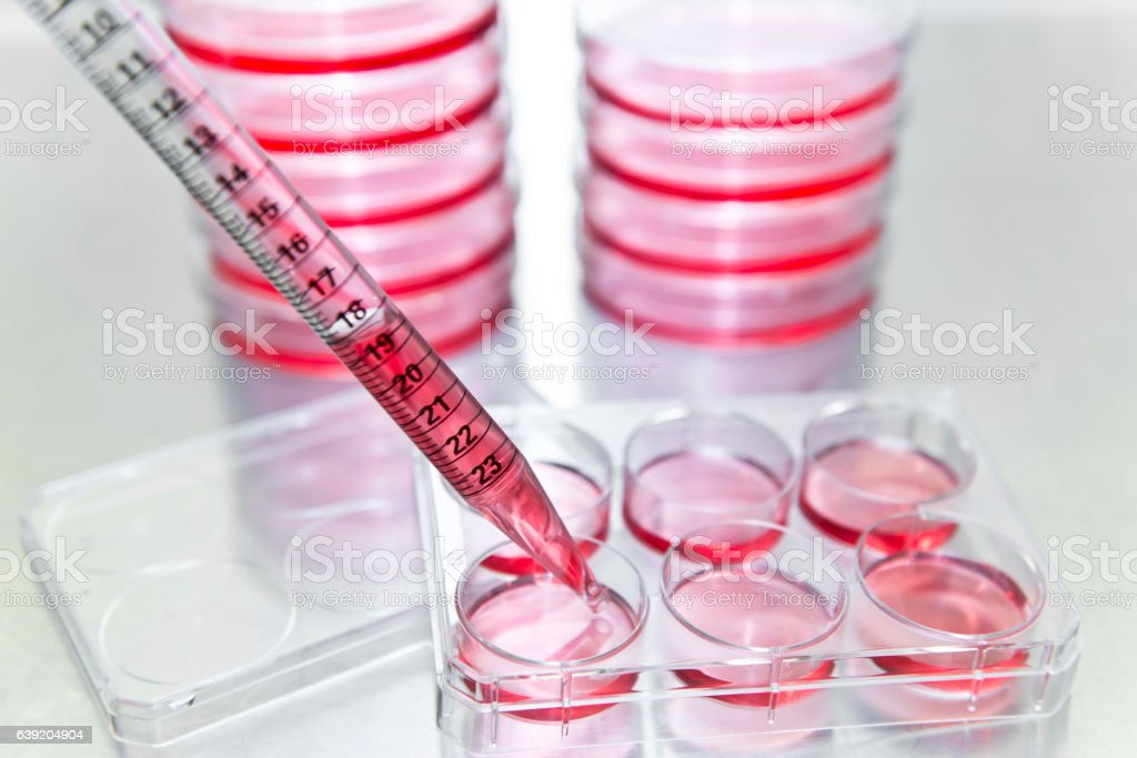 Cell subculturing from petri dish to 6 well microplate stock photo