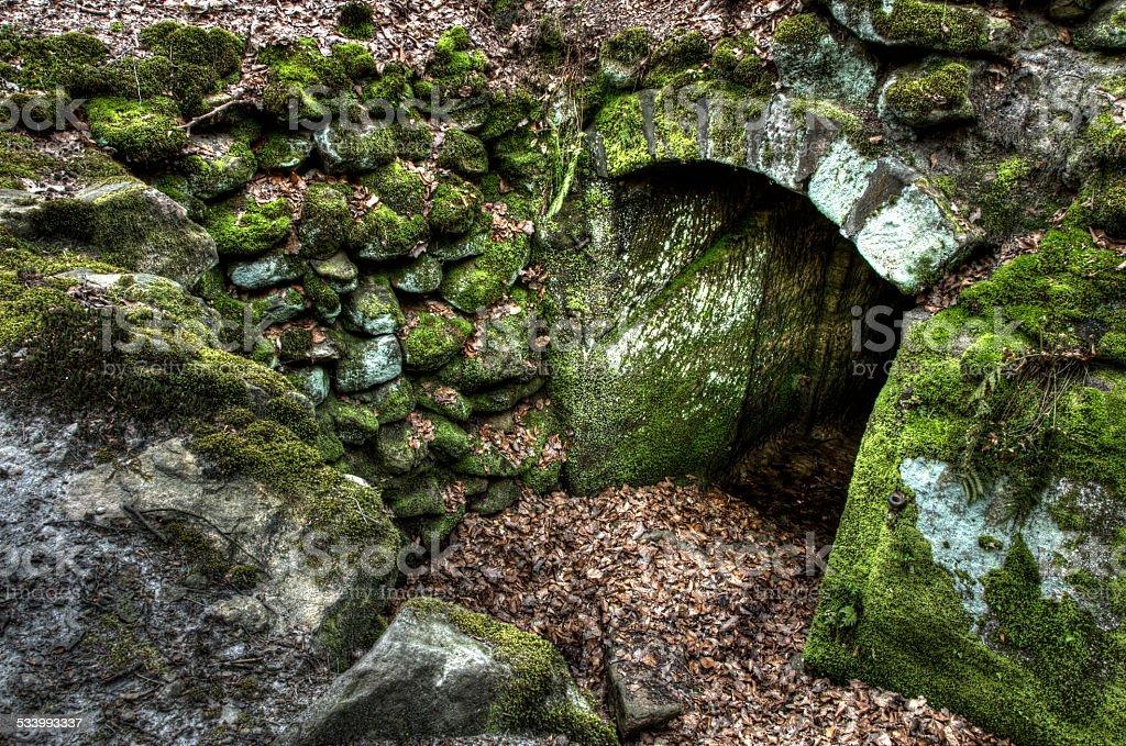 Kellereingang im Wald stock photo