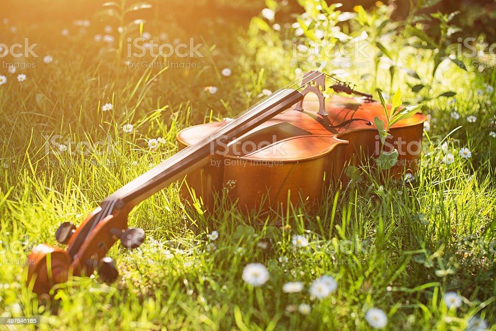 Cello in the grass stock photo