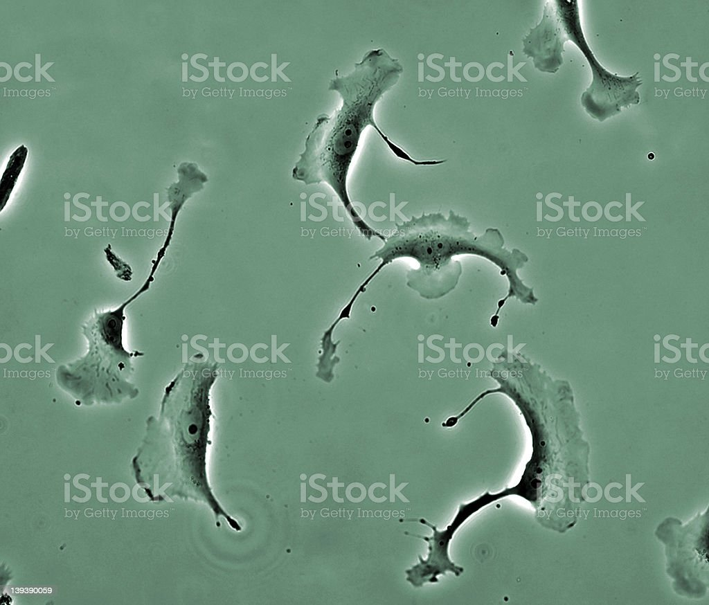 Cells in culture stock photo