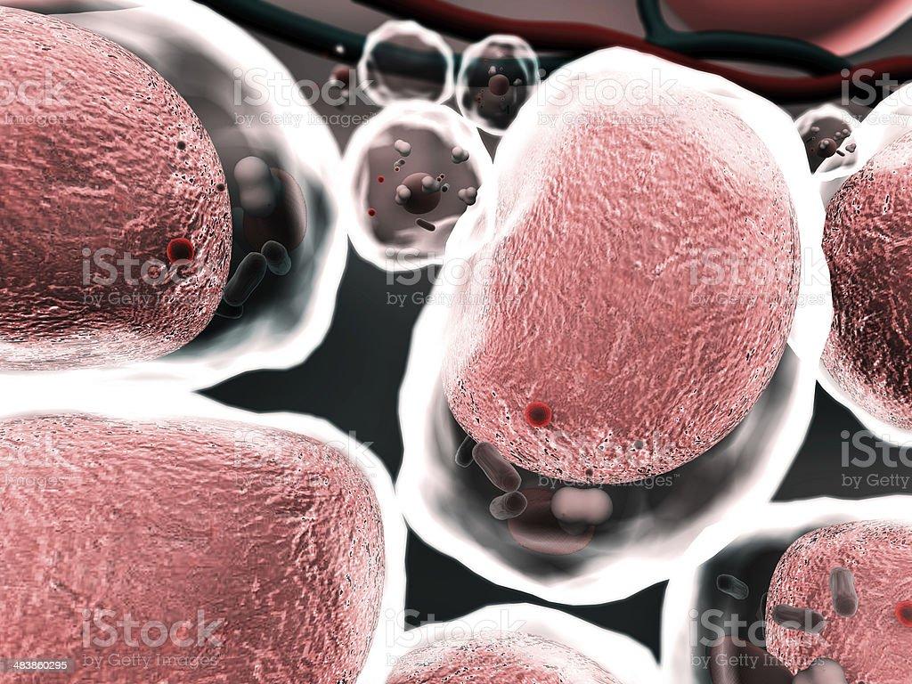 cells, karyon stock photo