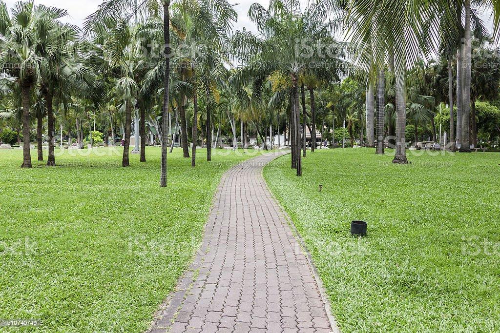 Zement Ziegelsteine Fußweg mit grünen Gräsern und Kokospalmen Lizenzfreies stock-foto