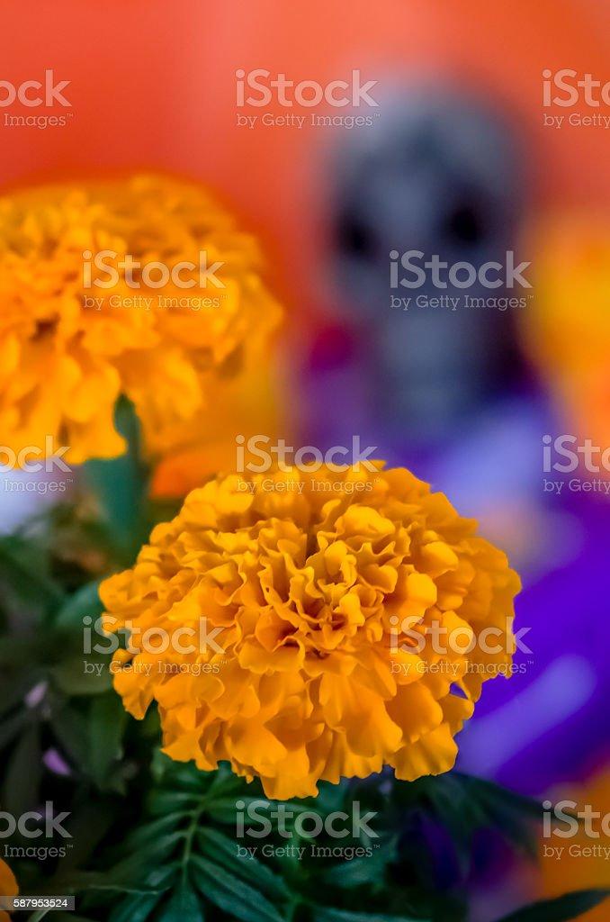 Cempasuchil flower stock photo
