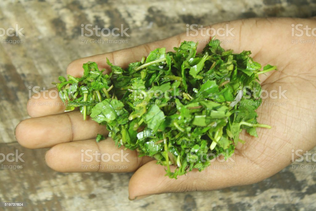 Centella asiatica leaves on hand stock photo