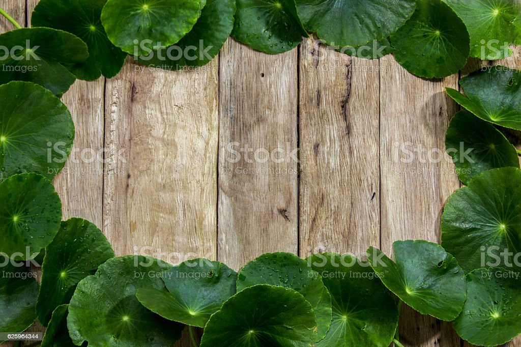 Centella asiatica on wood,Centella asiatica arranged in a frame stock photo