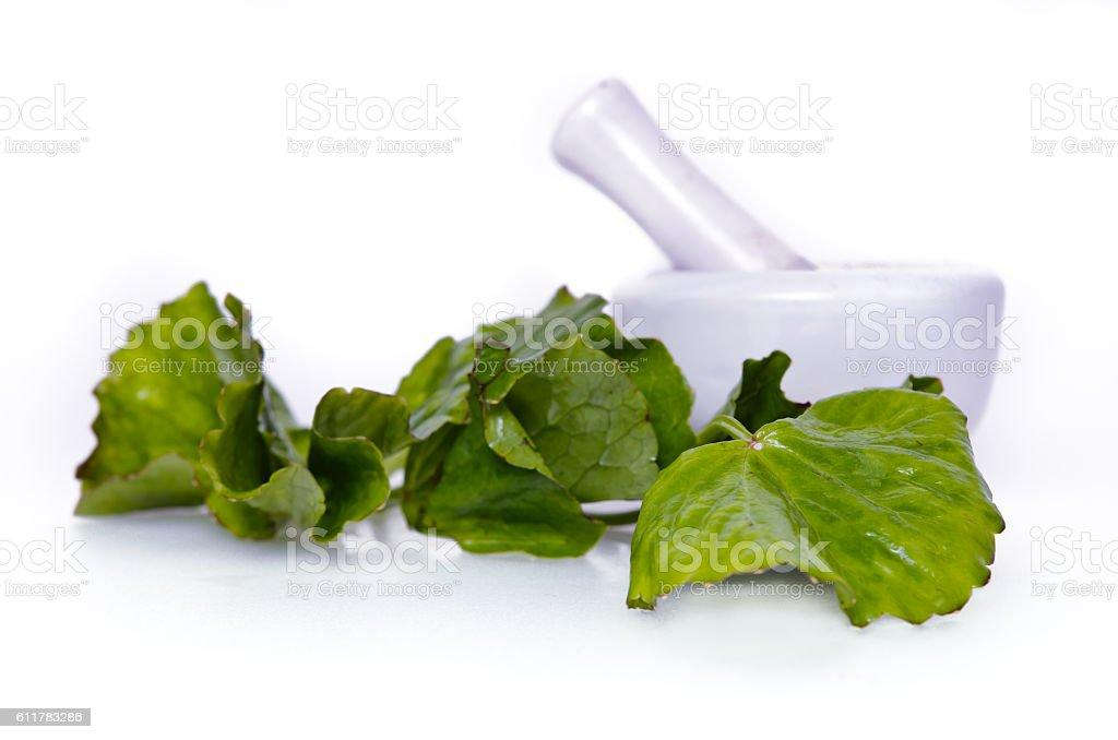 Centella asiatica or Thankuni in Indian, Buabok leaf in Thailand stock photo