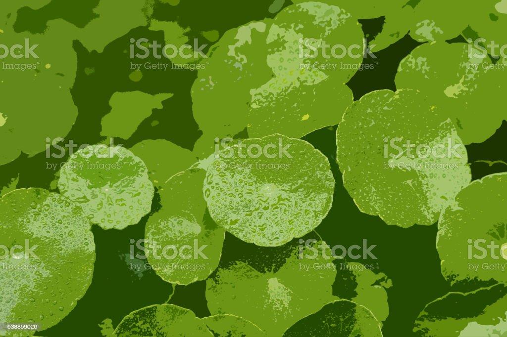 centella Asiatica stock photo