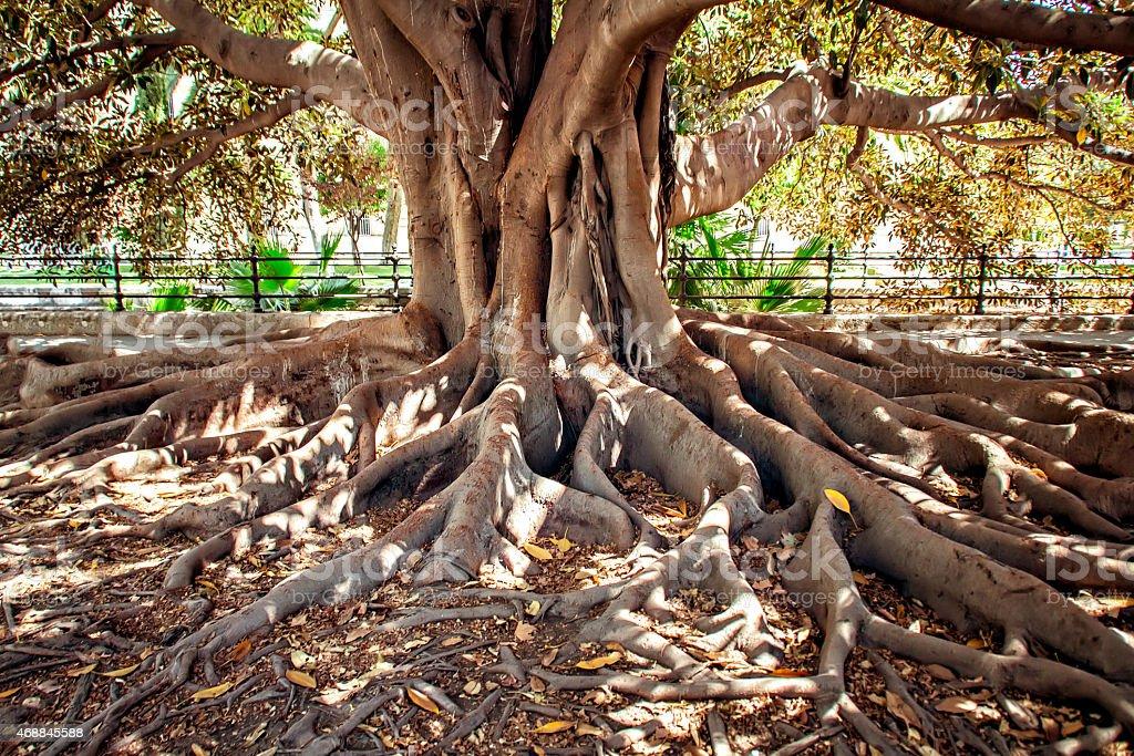 Centenarian tree stock photo