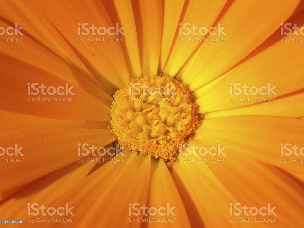 Center of Flower royalty-free stock photo