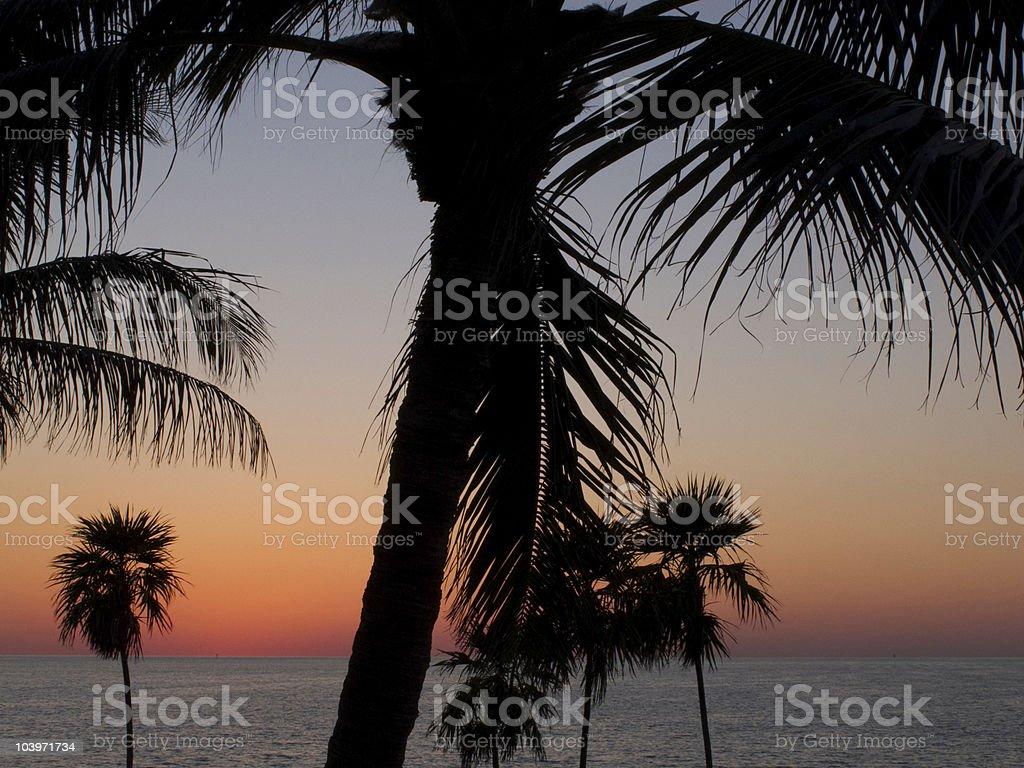 Center palm stock photo