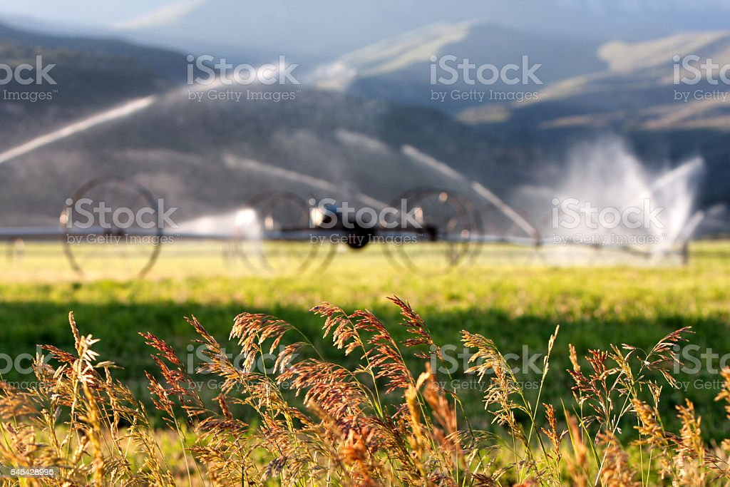 Center Pivot Irrigation On A Cultivated Field stock photo