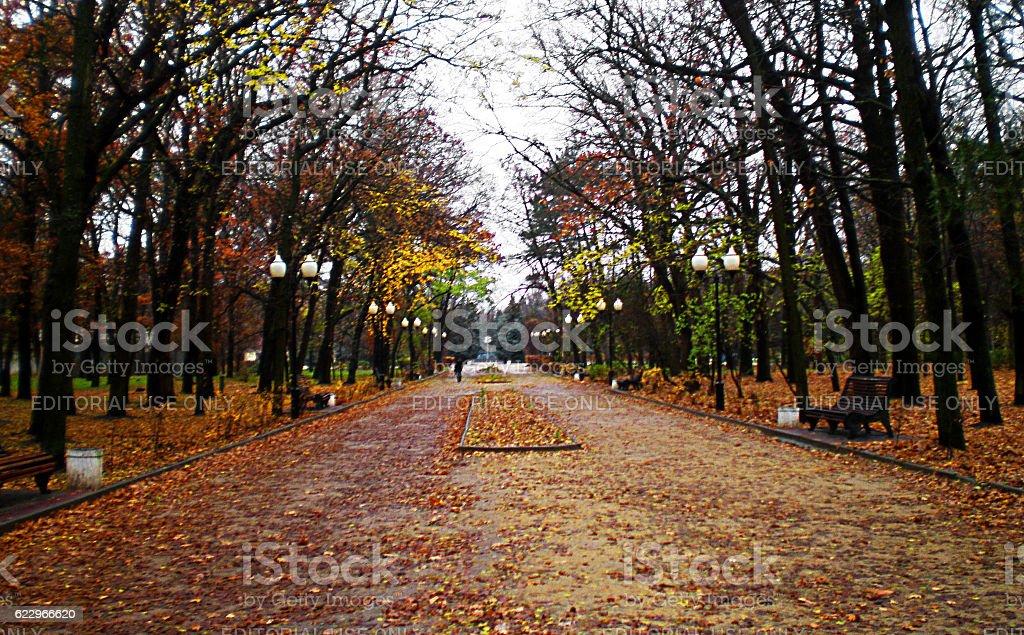 Central alley Gorky Park stock photo
