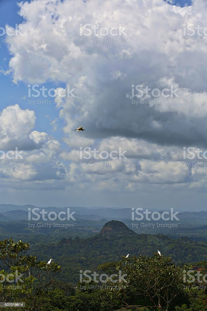 Central America Tropical Rain Forest, Mountains and Birds stock photo