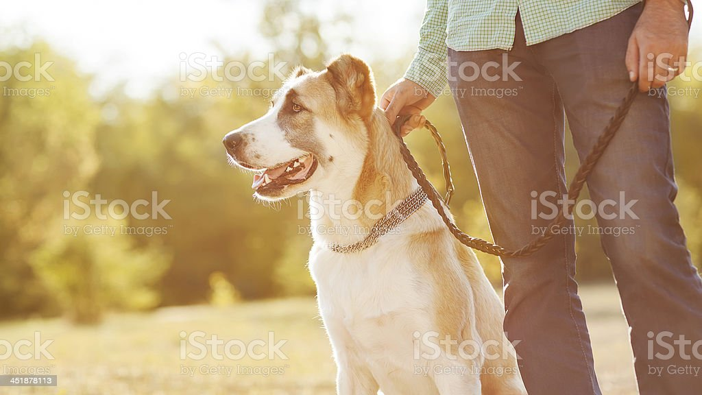 Central Asian Shepherd sitting at park with human companion royalty-free stock photo