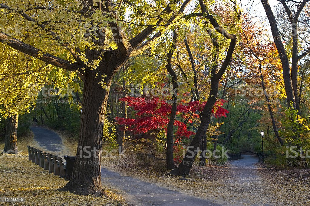 Central Park in autumn royalty-free stock photo