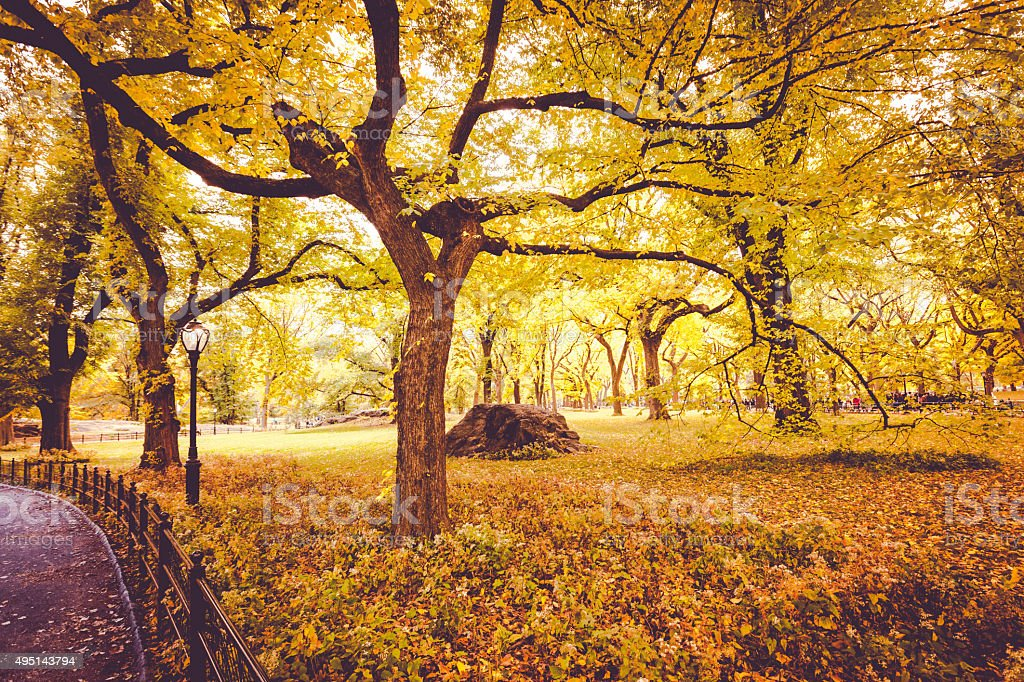 Central Park in Fall stock photo